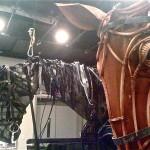War.Horse.reh.AV